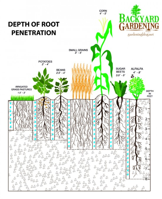 roots2-550x677[1]